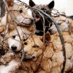 Perros, serpientes, murciélagos y pangolines: sí, estos animales se consumen en China