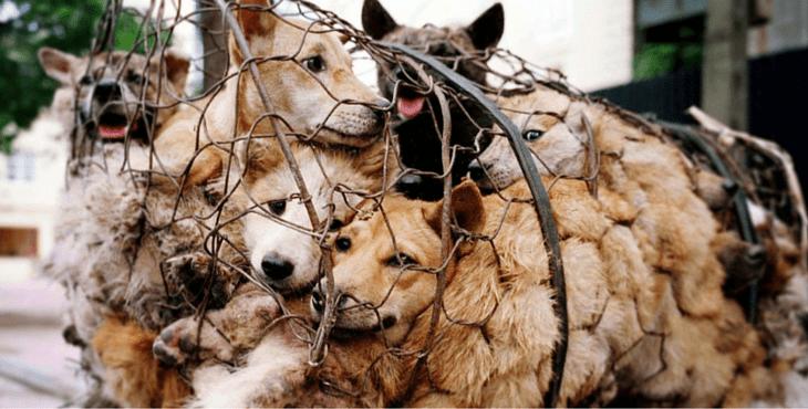 imagen de perros en mercado de china